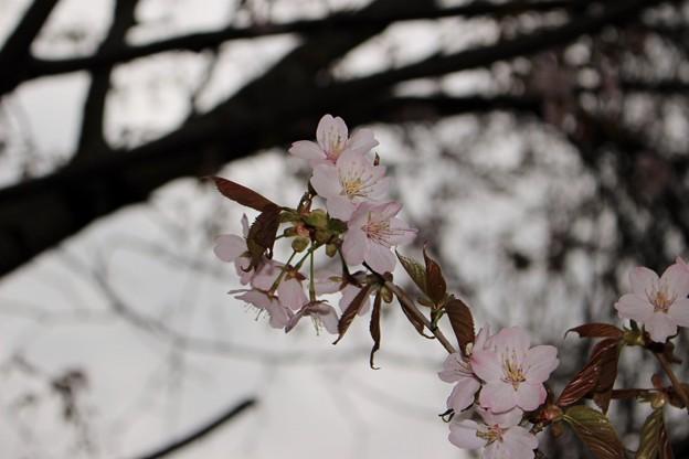 室蘭・入江運動公園にて (20)