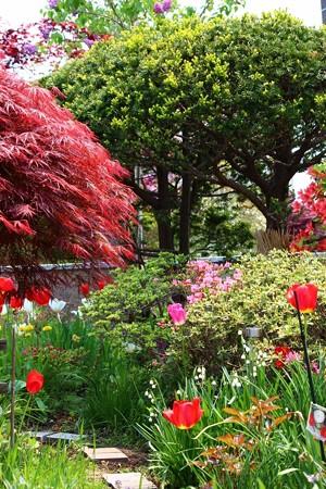 春の花々 (1) (733x1100)