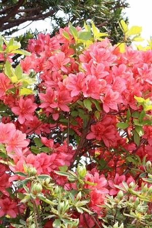 春の花々 (3) (733x1100)