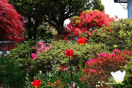 春の花々 (1100x733)