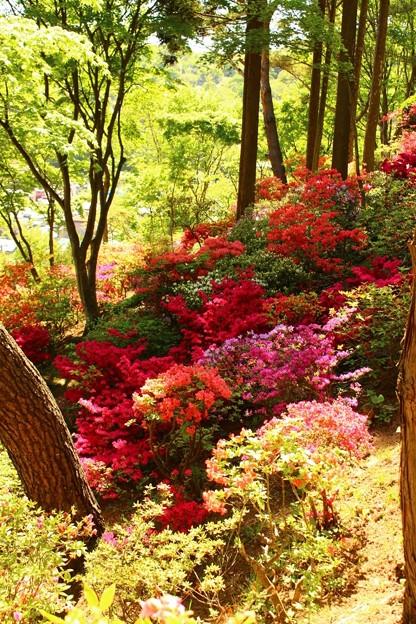 本輪西八幡神社 (7)