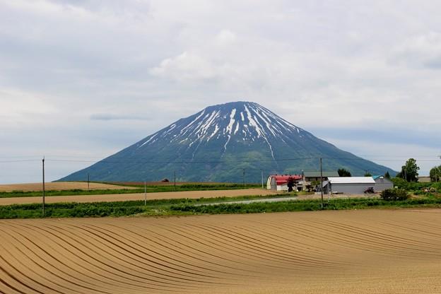 初夏の羊蹄山(2016年) (4)