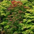 秋の訪れ (2)