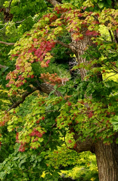 秋の訪れ (4)