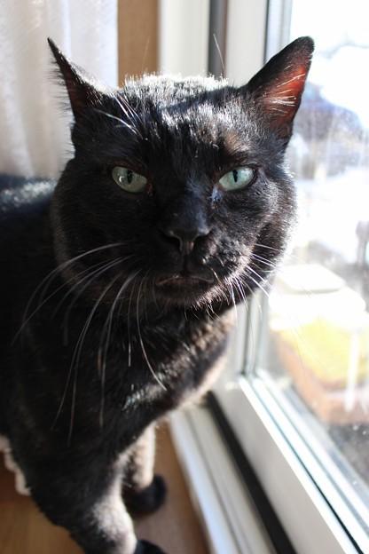 黒猫のクロ(=^o^=)