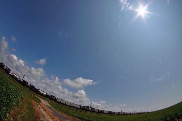 写真: 大豆畑4