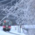 写真: 霜2