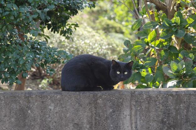 写真: 通りすがりの黒猫さん