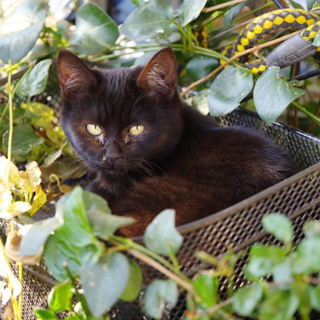 写真: 兄貴んちの黒猫さん