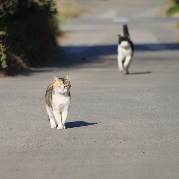 写真: シゲ子さんとうし若?