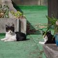 Photos: 散歩道の仔猫