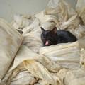 納屋の黒猫ちゃん