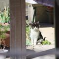 写真: 臆病な仔猫も大丈夫(^^)