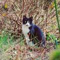 Photos: 土曜日の猫歩き