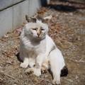 Photos: 暖かいから・・・