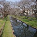 氷川神社の裏