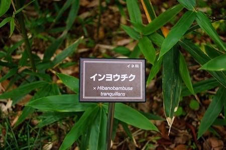 陰陽竹(インヨウチク)