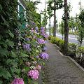Photos: DSC_0320_800