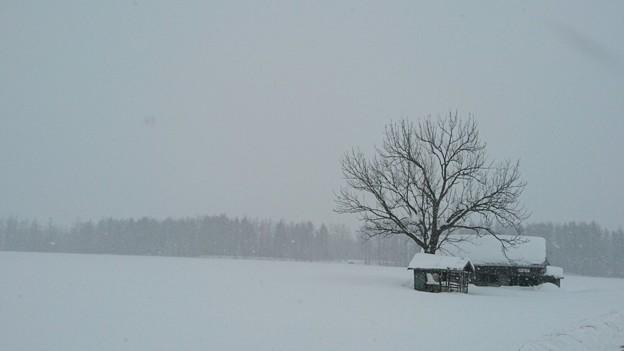 真っ白な風景