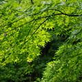 写真: 庭園1
