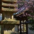鎌倉 覚園寺(かくおんじ)