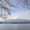 Photos: 富士山と桜(河口湖2015年4月18日)