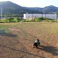 Photos: 小型犬エリア