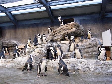 20100831 ペンギンプール01