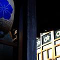 冬日射す神社