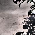 終焉の影花