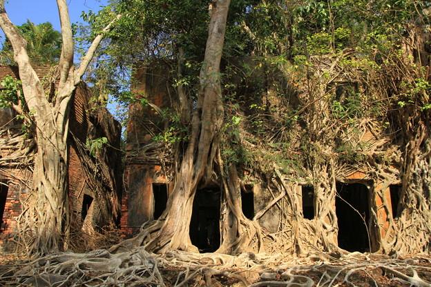 写真: 2238 密林に埋もれたロス島@アンダマン諸島
