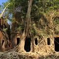 Photos: 2238 密林に埋もれたロス島@アンダマン諸島