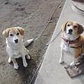 Photos: 犬 親子