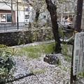 Photos: 早起き&京都…最近この組合せ増えてるTU-KOです(^^)こりゃいよいよ新天地なのか!?京都の歌姫RECへ参ります♪花びら舞う!