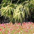 Photos: 長居植物園にて