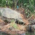 Photos: 翡翠と鴨