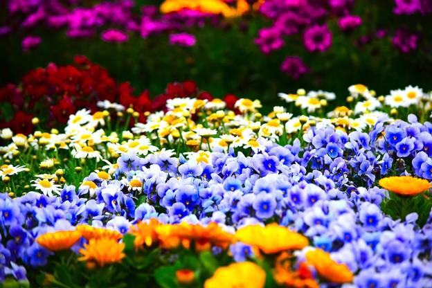 春の競演1