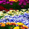 Photos: 春の競演1