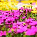 Photos: 春の競演2