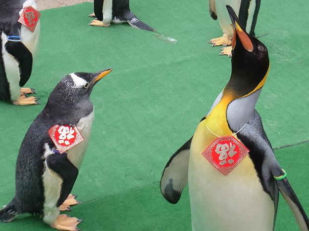 20170205 長崎ペンギン水族館 21