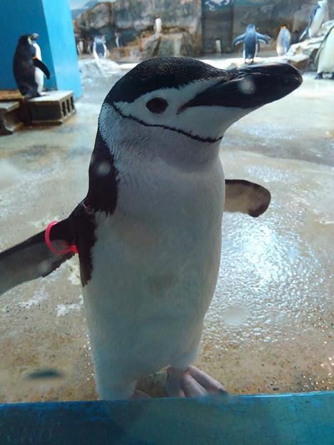 20170314 長崎ペンギン水族館 06