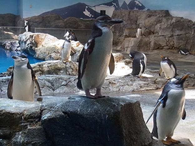 20170314 長崎ペンギン水族館 09