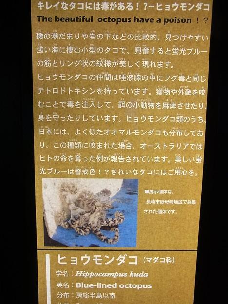 20170314 長崎ペンギン水族館 10