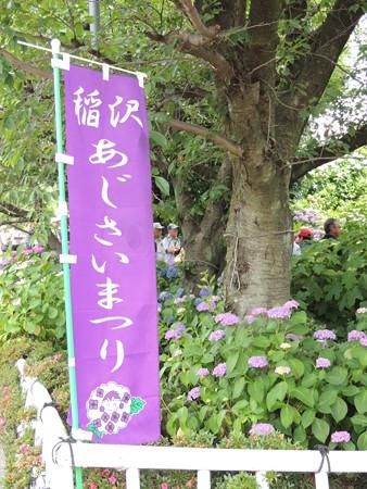 6/11(土) 稲沢の性海寺 あじさいまつりでLOVE INA30とか いなッピーとか。