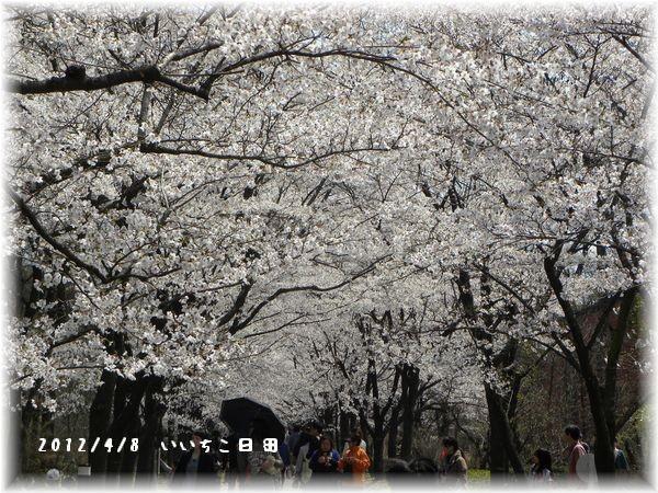 2012_0408鯉0013