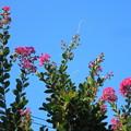 梅雨明け間近?薩摩の今朝の空(自宅の花)