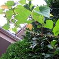 一雨ごとに秋の気配