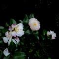 それぞれに(雨の朝自宅の花)