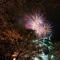 Photos: 夜桜 花火