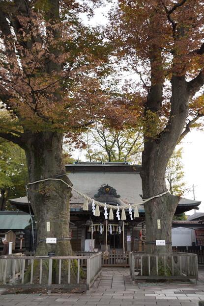 小平 熊野宮 2